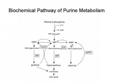 Biochemical pathway of purine metabolism. AMP = ad