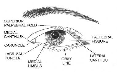 Eyelid subunits. Illustrated by Charles Norman.