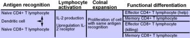 T cell lymphocyte differentiation table.