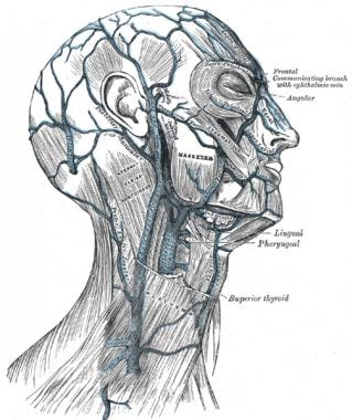 External jugular venous anatomy.