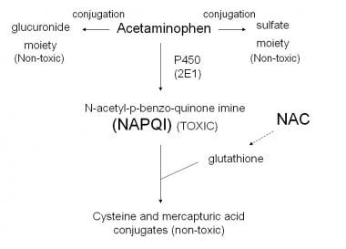 Acetaminophen metabolism.