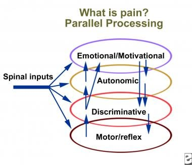 A neurophysiologist's view of pain. Courtesy of Al