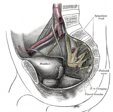 Hip nerves, lateral view.