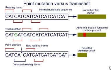 Point vs frameshift mutations. In contrast to most