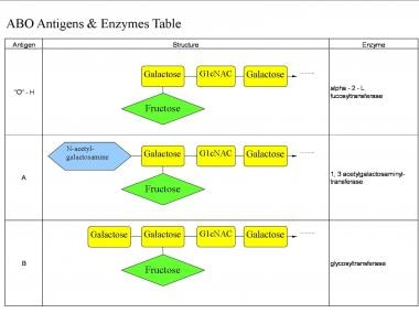 ABO antigens and enzymes table; G1cNAC = N-acetlyg