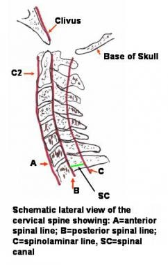 Schematic lateral view of the cervical spine. A=an