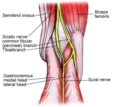 Popliteal Nerve Block: Background, Indications, Contraindications