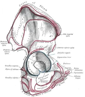 Hip Joint Anatomy Overview Gross Anatomy