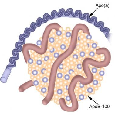 Schematic diagram of lipoprotein(a).