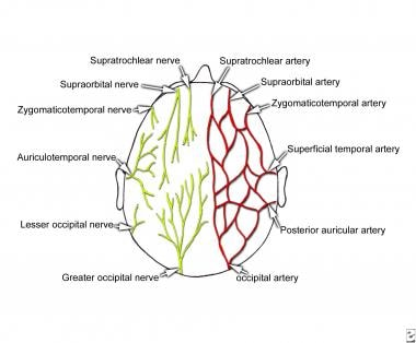 sensory innervation and arterial supply of the sca