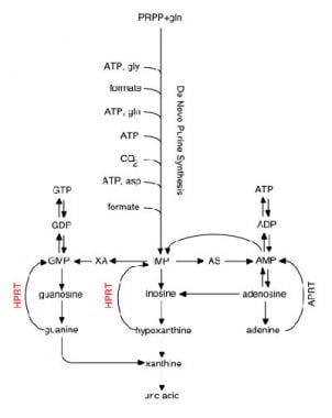 Purine metabolic pathways.