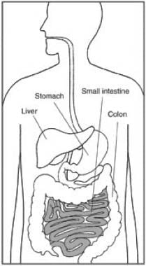 The small intestine is a major site of absorption.
