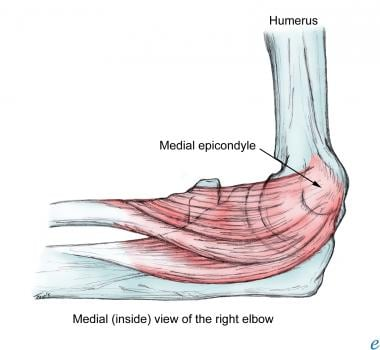 What Is The Functional Anatomy Of The Medial Epicondyle