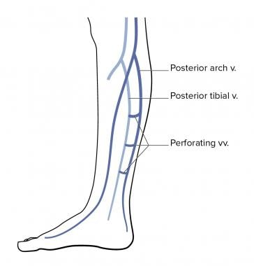 Lower-leg venous anatomy.