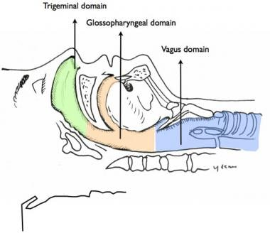 The upper airway is divided into three regions dep