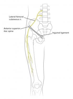 Anatomy of lateral femoral cutaneous nerve (LFCN).
