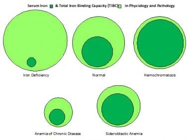 Iron and total iron-binding capacity in physiology