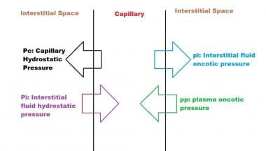 Forces determining capillary filtration