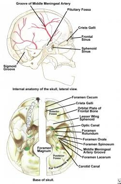 Internal anatomy of the skull base, lateral view,