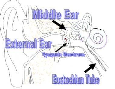 Anatomy of the external and middle ear.
