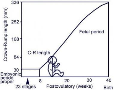 Graph showing the embryonic period (first 6 wk of