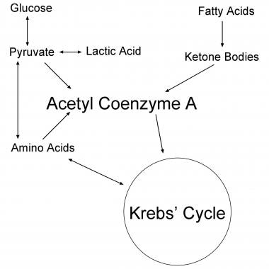 Krebs cycle.