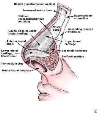 Nasal and Septal Fractures: Background, Epidemiology, Etiology
