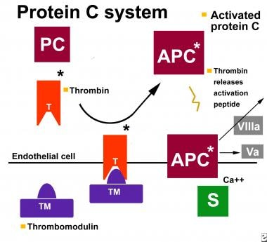 The protein C pathway. APC = activated protein C;