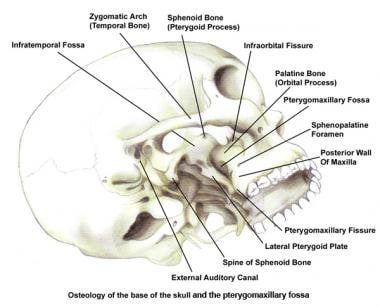 spine of sphenoid