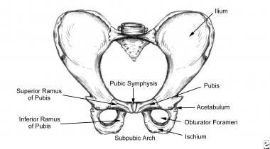 Osteitis Pubis: Practice Essentials, Background, Anatomy