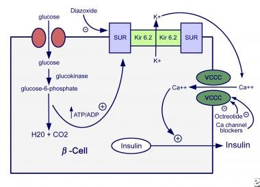 Mechanisms of insulin secretion.