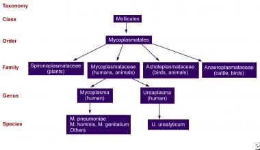 General characteristics of Mycoplasma species.