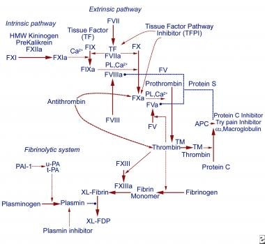 Coagulation cascade. Solid arrows represent activa