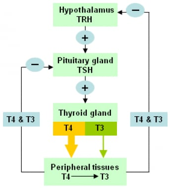 Hypothyroidism Practice Essentials Background Pathophysiology