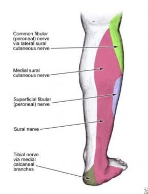 Superficial Peroneal Nerve Block: Overview, Indications ...