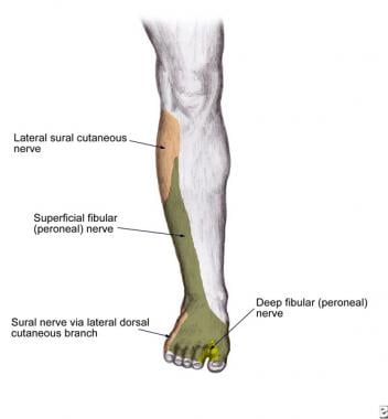 Superficial peroneal nerve dermatome at the level