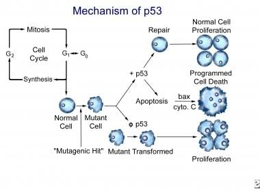 The mechanism of TP53 for normal function and for