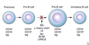 Early stages of B-cell differentiation can be iden