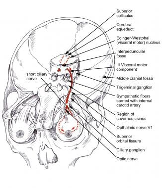 Vertebrobasilar Stroke Overview Anatomy Of The Vertebral And