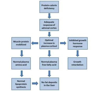 Hormonal adaptation to the stress of malnutrition: