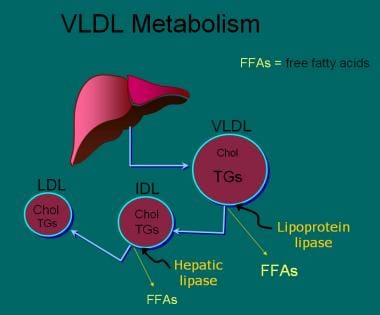 Once very low-density lipoprotein (VLDL) has been