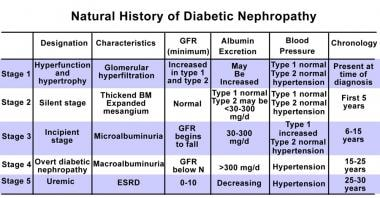 Stages in the development of diabetic nephropathy.