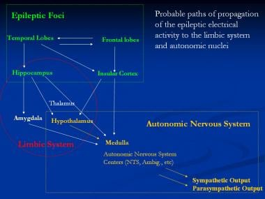 Probable paths of propagation of the epileptic ele