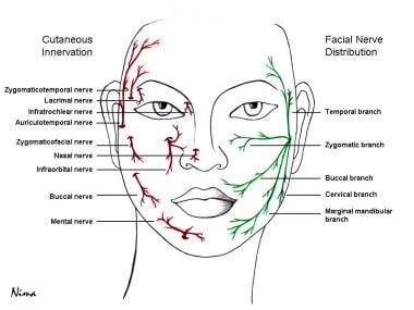 Cutaneous innervation of the face and facial nerve