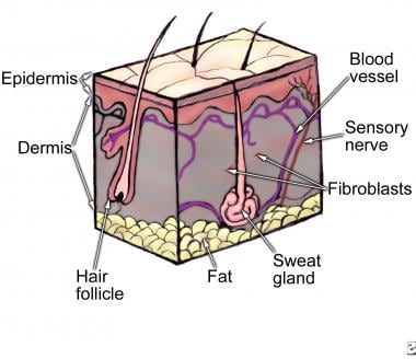 Layers of the Skin: A Schematic Depiction