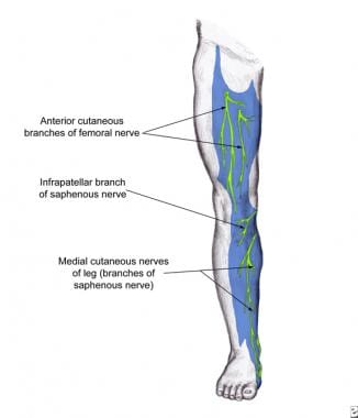 Saphenous nerve dermatome of the anteromedial leg.