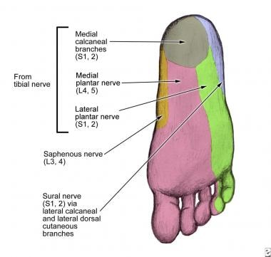Saphenous nerve dermatome at the level of the foot