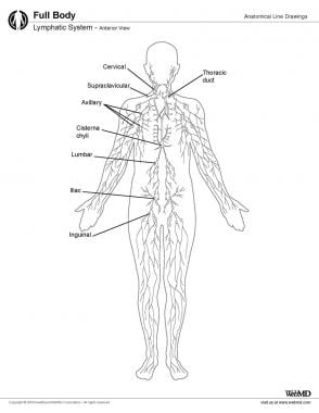 Lymphatic system, anterior view.