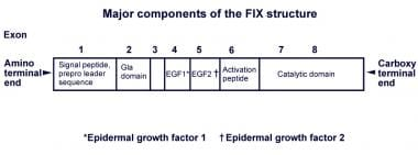 Major components of the factor IX structure.