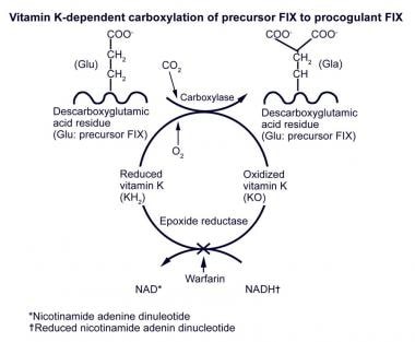 Vitamin K–dependent carboxylation of precursor fac
